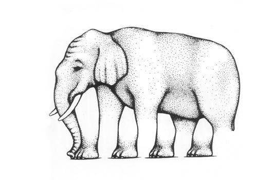 Ile nóg ma słoń?