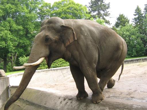 Słoń z Hamburga