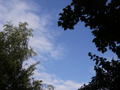 Widok na niebo
