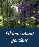 www. pikininigardens.blogspot.com