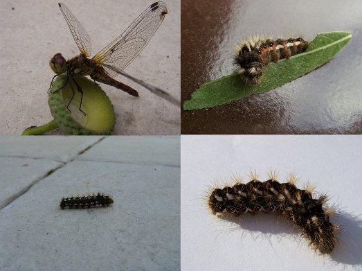 jesienne owady