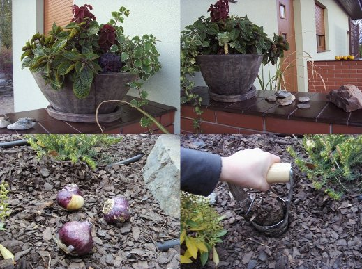 jesienne sadzenie