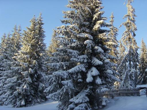 Śnieg w górach