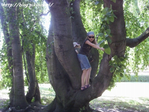 Drzewo w Austerlitz