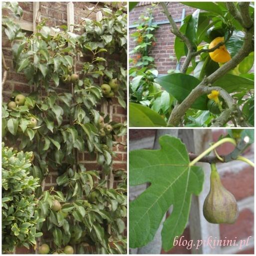 Owoce w Het Loo