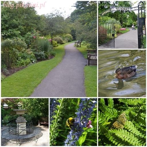 Ogród botaniczny w Bath