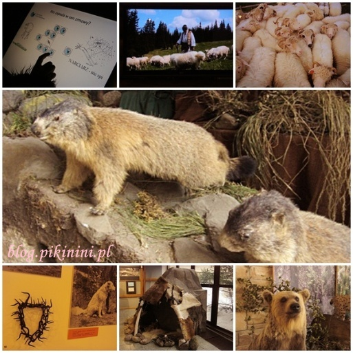 Muzeum Tatrzańskiego Parku Narodowego