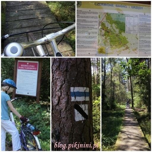 Rowerami w Biebrzańskim Parku Narodowym