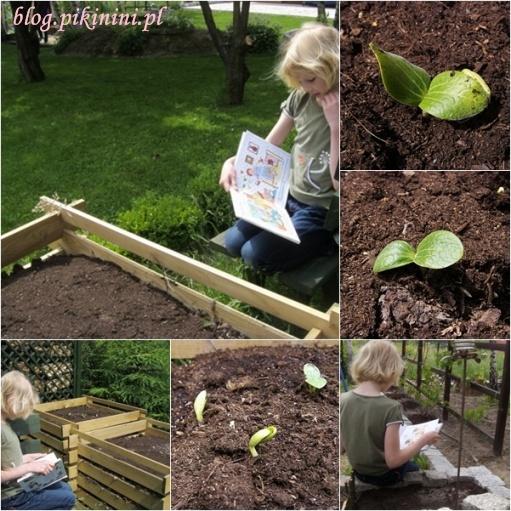 Czytanie w warzywniku