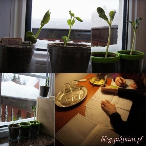 Laboratorium roślinne