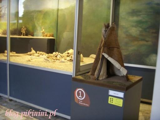 W poznańskim muzeum archeologicznym