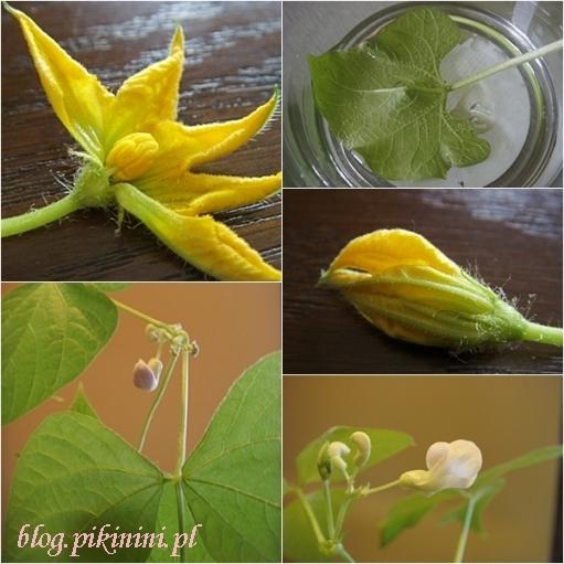 Green factory Navir - Liście i kwiaty