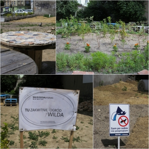 Miejski ogródek na Wildzie