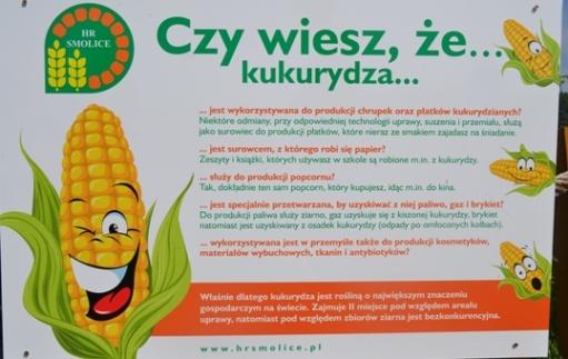O kukurydzy