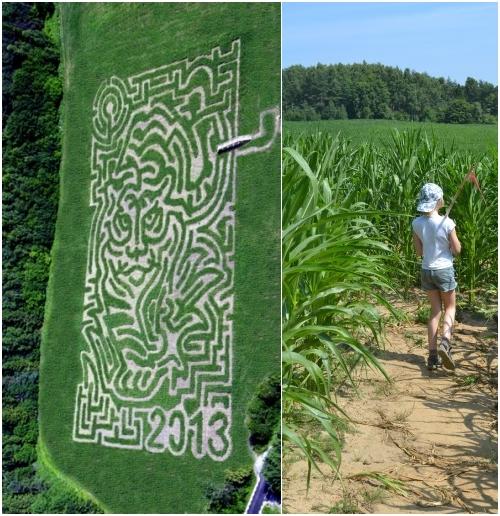 Labirynt z kukurydzy