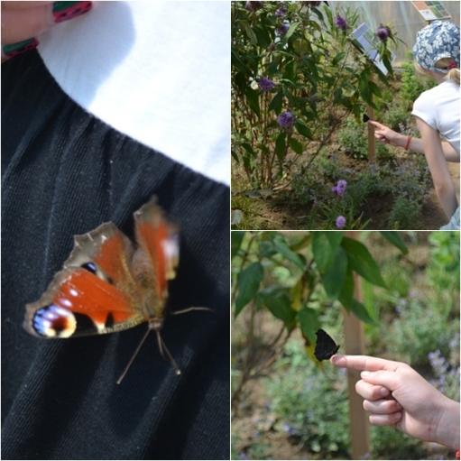 Motyle i dzieci