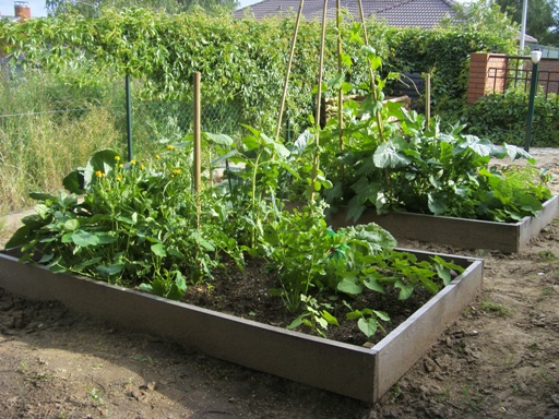 warzywniki w skrzynkach