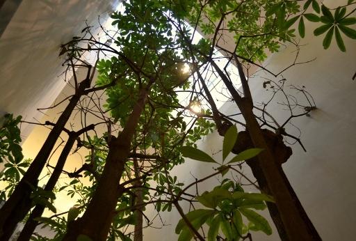 Drzewa w bibliotece