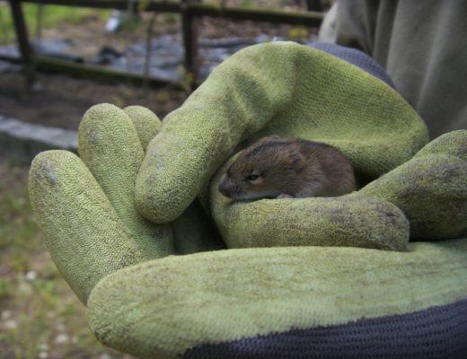 Myszka w ogrodzie