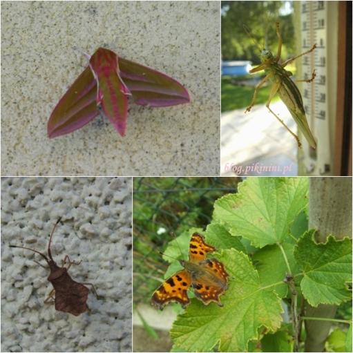 Nasze owady