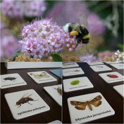Pszczoła i owadzie memo