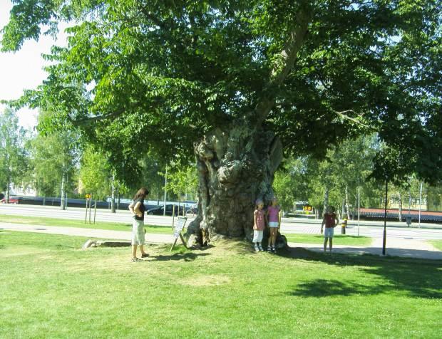 Lemoniadowe drzewo