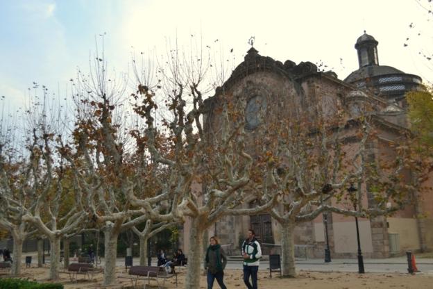Papugi w Barcelonie 1