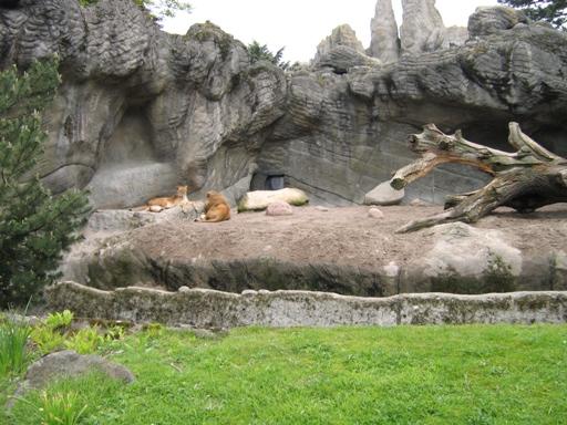Lwy w Hamburgu