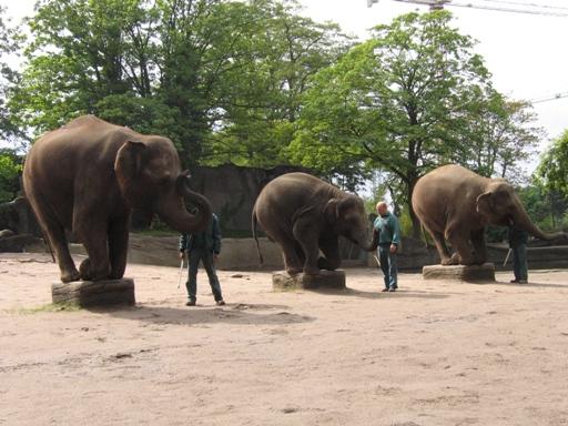 Występ hamburskich słoni