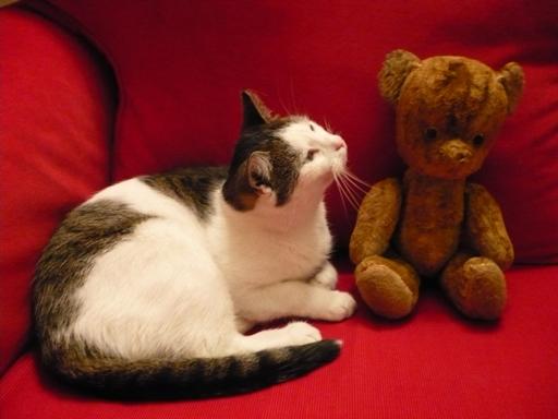 Piotruś z kotem