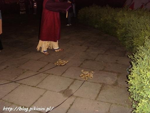Wyścig indiańskich żółwi