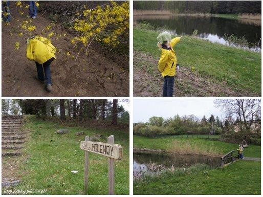 ścieżki arboretum w Zielonce
