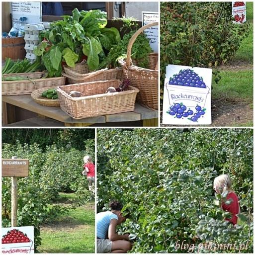 Na plantacji owocowej
