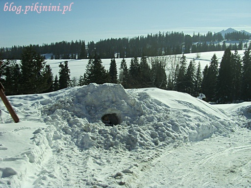 W śnieżnej zaspie