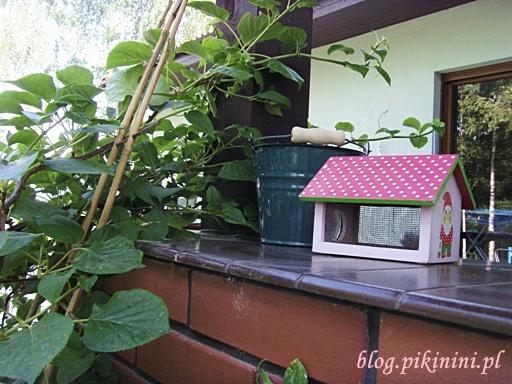 W ogrodzie Pikinini
