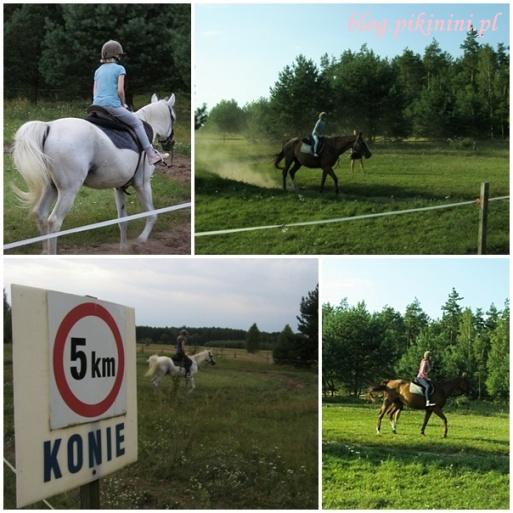 Konie w Kuwasach
