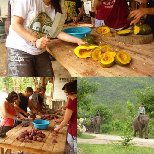 Elephants world w Tajlandii