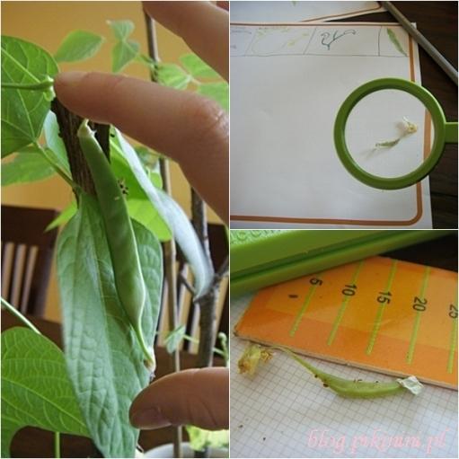 Green factory Navir - Owoce