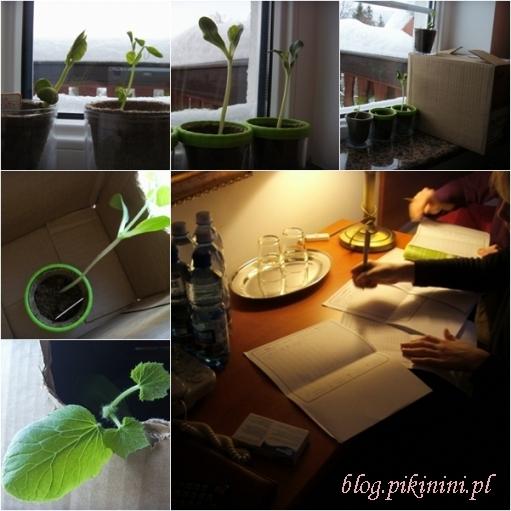 Green factory Navir - rośliny na wakacjach