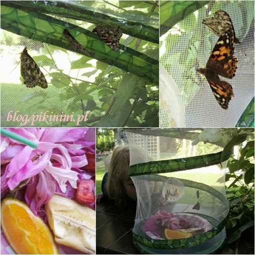 Opieka nad motylami