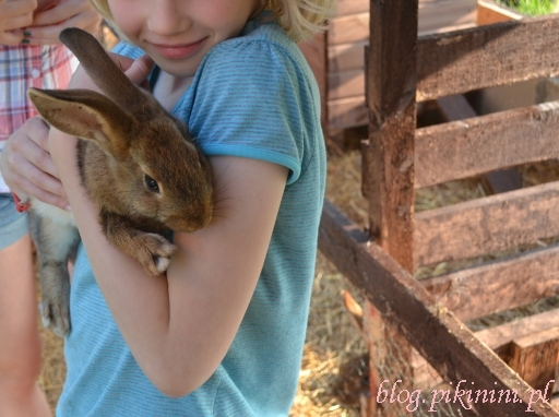 Opieka nad królikem