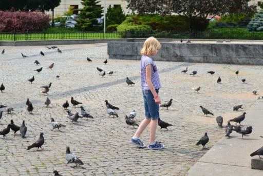 Magiczne gołębie
