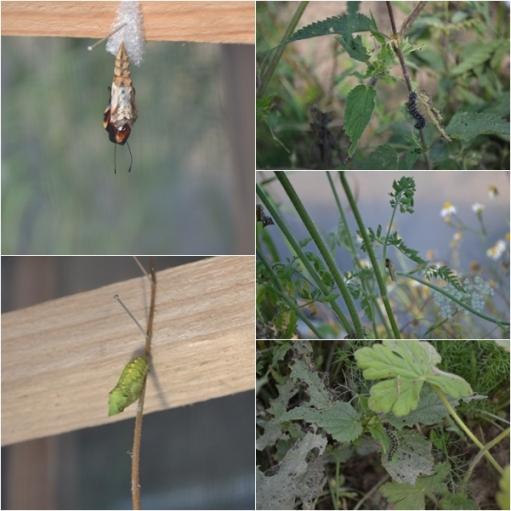 Motyle przedszkole