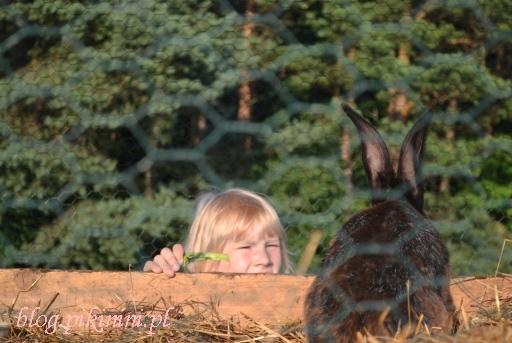 Karmienie królika