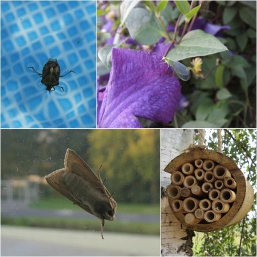 Domek dla owadów w Pikinini