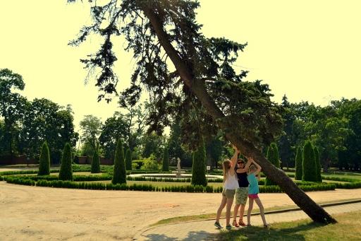 Będlewo i drzewo