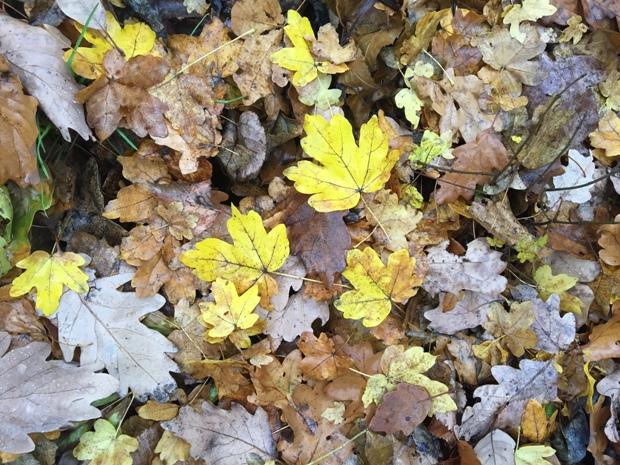 Znów liście